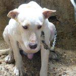 Galgos del Sur y Seprona decomisan 8 perros de un rehalero de Granada en condiciones lamentables